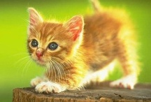"""Adorable / Anything that makes you go """"awwwwww""""."""