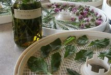 Apothecary / Herbs and their magical powers