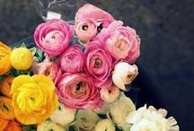 Garten & de fleurs