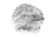 Folksy Hedgehog Heaven