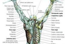 Massage & Physiology / by Cammy