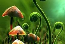 Mushrooms, Moss, Fungi / by Cammy