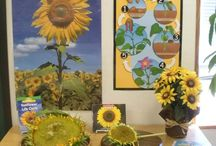 Discovery Table / Nature table or Discovery table ideas to keep the children curious.