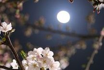 Beautiful photo / Beautiful photo, in my opinion|Прекрасные фотографии, по моему мнению)