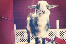 aweee ♥♥ / adorable animals, babies, moments, etc.  / by Juliie