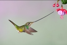 Just Hummingbirds / Humming birds are interesting to watch. / by Richard Moser