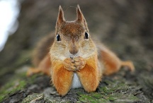 Squirrels / We feed our neighborhood squirrels. / by Richard Moser