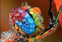 Dazzle me! / ~awe-inspiring~ / by Jamie Lynn