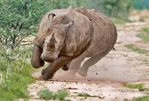 Wildlife 2 / by Richard Moser