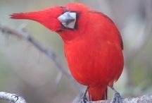 Birds 2 / by Richard Moser