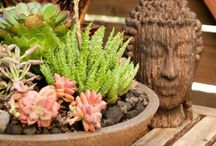 Garden Goods / by Sarah Gosling ;-)