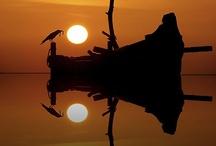 ~reflections~ / by Jamie Lynn