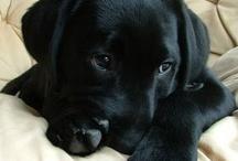 Doggie Love..