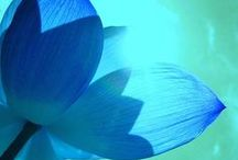 ❃lovely lotus❃ / Different shapes, shades of blue, and other ideas for my next tattoo - a beautiful blue lotus! :)  ~The blue lotus is a symbol of the victory of the spirit over the senses, of intelligence and wisdom, of knowledge. It is always represented as a partially opened bud, and (unlike the red lotus) its centre is never seen. It is the lotus of Manjusri, and also one of the attributes of Prajnaparamita, the embodiment of the 'perfection of wisdom'~  / by Jamie Lynn