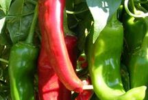 Recipes for Mexican / Mexican food ~ different types of, Tex-Mex, Colorado, New Mexico, green vs. red chili, etc.