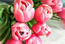 Beautiful blooms / Find inspiration for your own garden from these beautiful blooms!