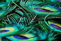 Peacocks / by Molly Hastings