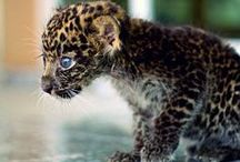 Leopard / by Molly Hastings