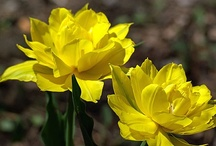 Spring bulbs and blooms / by Canadian Gardening