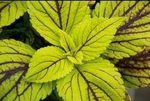Fantastic foliage / by Canadian Gardening