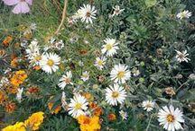 Nature / Flower