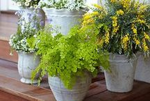 Green Thumb / Gardening hacks, gardening tips and tricks, gardening ideas, vegetable gardening, outdoor living, and more.