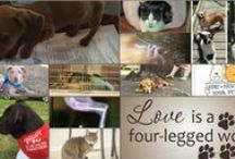 Animal Rescue in Northwest Arkansas / Shelters, rescue organizations and adoptable animals in northwest arkansas