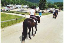 Horses / by Celia