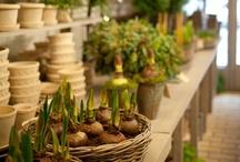 {garden: potting shed}