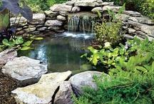 bldg a pond, swim pools / by Gloria Thompson