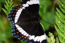 butterflies / by Gloria Thompson