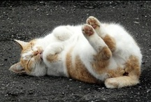 cats / by Nḭ̃c̰̃õ̰l̰̃ḛ̃