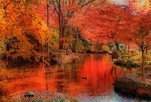 seasons ~ autumn <3 the season i love the most <3 / by Nḭ̃c̰̃õ̰l̰̃ḛ̃