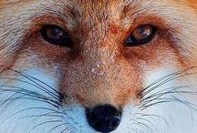 animalistic ~ animals / by Nḭ̃c̰̃õ̰l̰̃ḛ̃