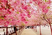 seasons ~ spring time / by Nḭ̃c̰̃õ̰l̰̃ḛ̃