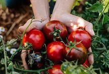 Plant based eating & living