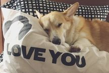 Corgi レ O √ 乇 ♥ / I love corgis! Can you tell from my boards? LOL! Love the breed.  / by L I N D A