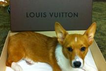 Louis Vuitton レ O √ 乇 ♥
