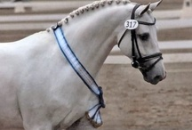 The Equine Divine / by Sharon Woodbury