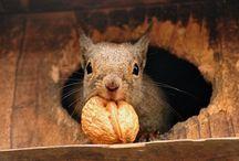 Squirrel レ O √ 乇 ♥