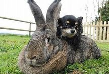 Flemish Giants  レ O √ 乇 ♥ / Beautiful Flemish rabbits
