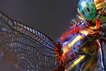 insects / by Negaar Misaghian