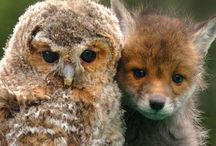 Owl レ O √ 乇 ♥