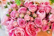 Floral  / by Keri