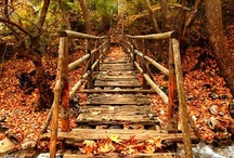 Fall ... I'm falling for you!