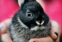 SQUEEE! Adorable Photos and GIFS
