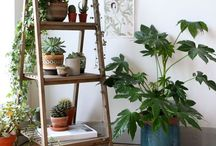 Plants plants plants!