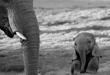 Elephants!<3