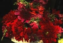 All red romantic wedding inspiration