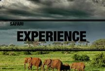 Safari Experiences / by Asilia Africa